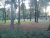Εγκατάλειψη του πάρκου